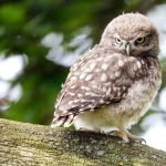 ---bird-sitting-owl-7262