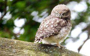 ---bird-sitting-owl-7262