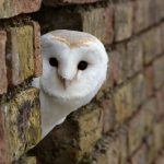 ---desktop-backgrounds-owls-free-8321