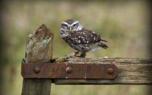 ---fence-owl-14750
