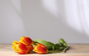 ---flowers-tulips-table-8834
