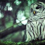 ---forest-nature-branch-owl-bird-awesome-photo-8893