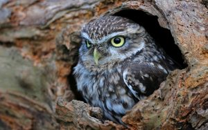 ---hollow-tree-trunk-bird-owl-15308