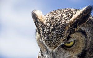 ---night-owl-4942