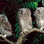 ---owl-11063