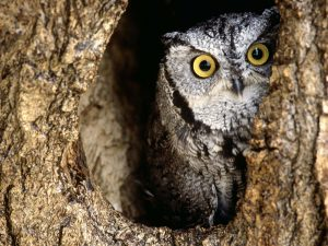 ---owl-11064