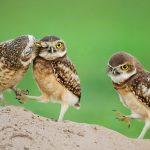 ---owl-16118