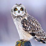 ---owl-1791