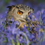 owl-2560x1600-hd-5k-3838