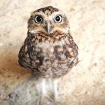 ---owl-baby-11049
