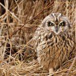---owl-bird-grass-11050