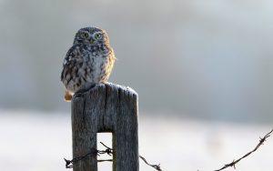 ---owl-bird-look-11051