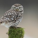 ---owl-bird-tree-stump-moss-11052