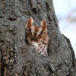 ---owl-in-tree-hole-11056