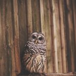---owl-photo-bird-11059