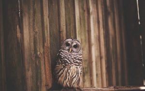 ---owl-photo-bird-11059