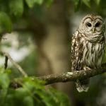 ---owl-tree-11060