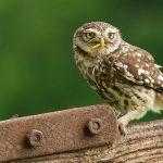 ---owl-worm-11062