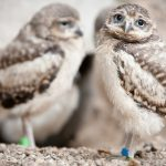 ---owls-birds-blur-16120