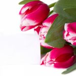 red-tulips-2880x1800-bouquet-5k-4483