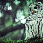 ---sad-owl-picture-16483
