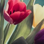 tulip-flowers-2880x1800-red-purple-yellow-tulips-4k-1727