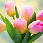 tulips-2880x1800-bouquet-flora-5k-3624