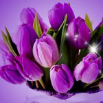 ---tulips-wallpapers-5947