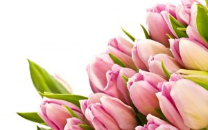 ---tulips-wallpapers-5949