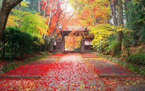 Colorful Autumn scene in Komyo-Ji