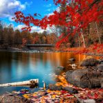autumn-2560x1440-foliage-lake-forest-leaves-hd-4k-1729
