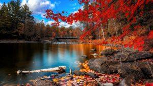 autumn-2560x1440-foliage-lake-forest-leaves-hd-4k-1729