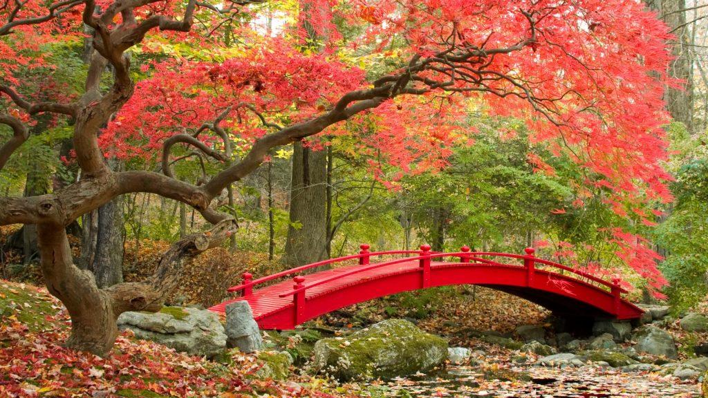 autumn-2560x1440-maple-trees-japanese-garden-4k-3546 ...