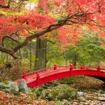 autumn-2560x1440-maple-trees-japanese-garden-4k-3546