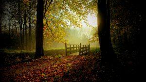 autumn-2560x1440-trees-dark-forest-sun-222