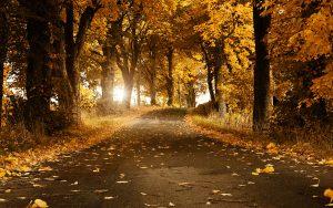 ---autumn-breeze-wallpaper-6759