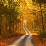 ---autumn-forest-road-scenery-6762