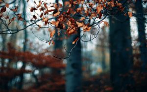 ---autumn-forest-trees-branches-dry-leaves-photo-2270