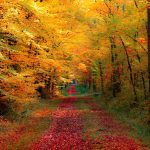 ---autumn-forest-wallpapers-6763