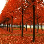 ---autumn-hd-wallpaper-6764
