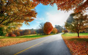 ---autumn-in-country-road-6765