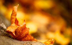 ---autumn-leaf-background-13378