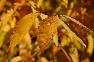---autumn-leaf-hd-wallpapers-6771