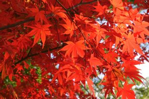 ---autumn-leaf-wallpapers-6774