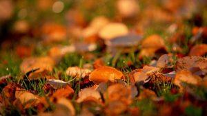 ---autumn-leaves-6781