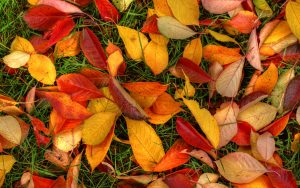 ---autumn-leaves-ground--6776