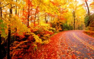 ---autumn-leaves-wallpapers-2273