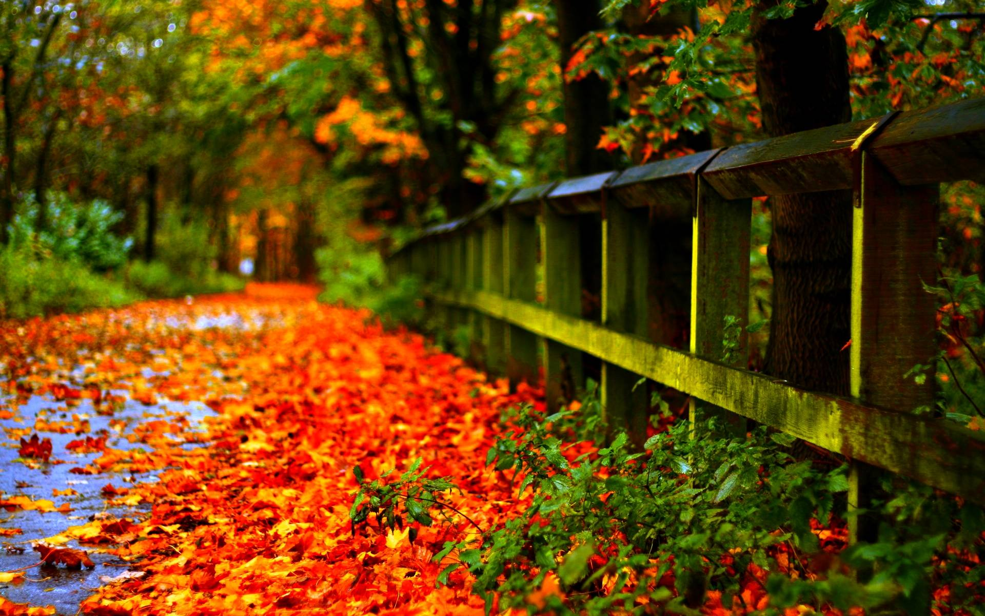 autumn leaves wallpapers 2274