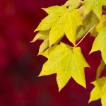 ---autumn-leaves-wallpapers-2275
