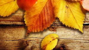 ---autumn-leaves-wallpapers-2276